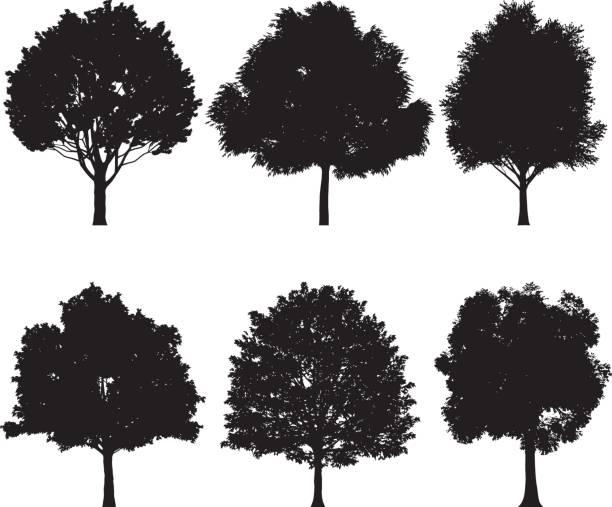 Vektor-Illustration der Baum Silhouetten – Vektorgrafik