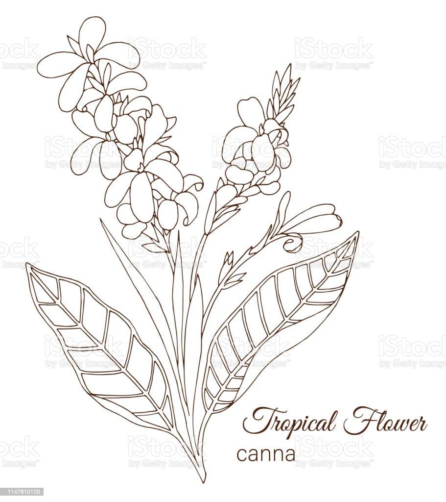Vektor Illustration Tropikal Cicek Beyaz Arka Planda Izole El