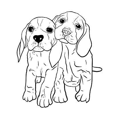 Vector Illustration of two cute puppies, breed of cops, Estonian cops, beagle, pets