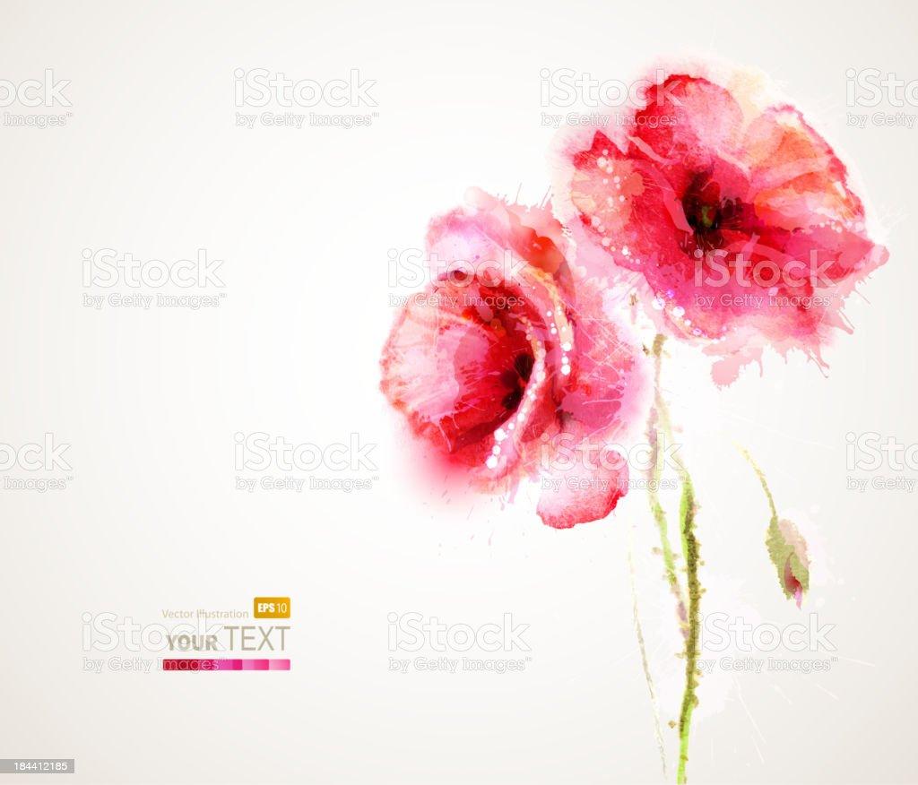 Vector illustration of two flowering red poppies vector art illustration