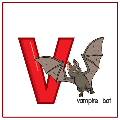Vector illustration of Vampire bat isolated on a white background. With the capital letter V for use as a teaching and learning media for children to recognize English letters Or for children to learn to write letters Used to learn at home and school.