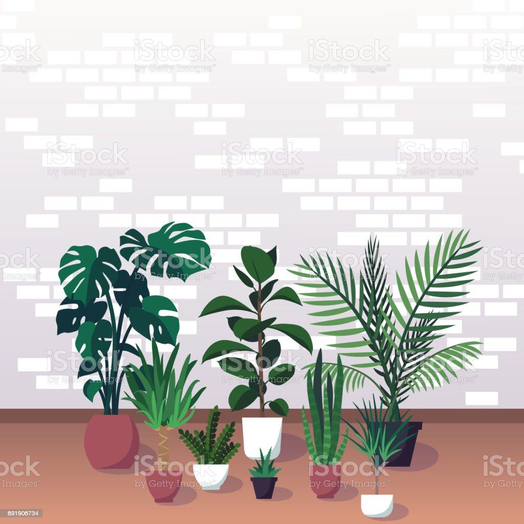 Vektorillustration Der Verschiedenen Dekorativen Zimmerpflanzen In