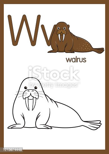 istock Vector illustration of Walrus with alphabet W for children learning practice ABC on A4 Paper size ready to print. 1213674448