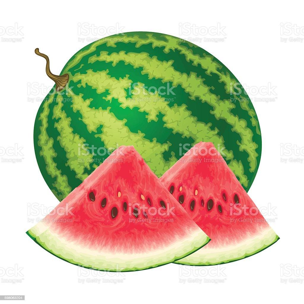 Vector illustration of watermelon vector art illustration