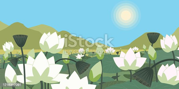 Vector illustration of white lotus blossom and leaves in lake with mountains and blue sky. Nature landscape background.