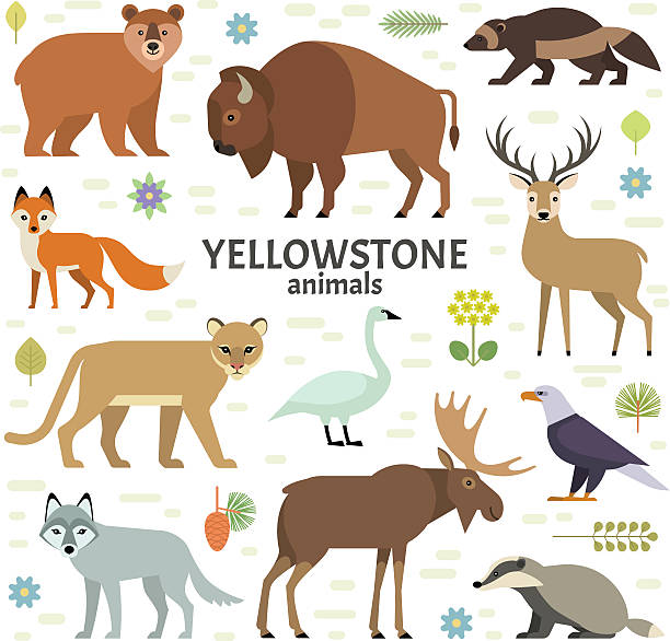 Vector illustration of Yellowstone National Park animals Moose, elk, bear, wolf, fox, bison, badger, wolverine, mountain lion, bald eagle, swan - isolated on transparent background. cute wolf stock illustrations