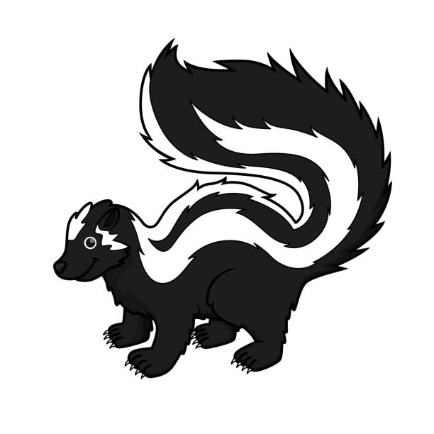 Vector illustration of zorilla isolated on white background. Vector illustration of zorilla isolated on white background. skunk stock illustrations