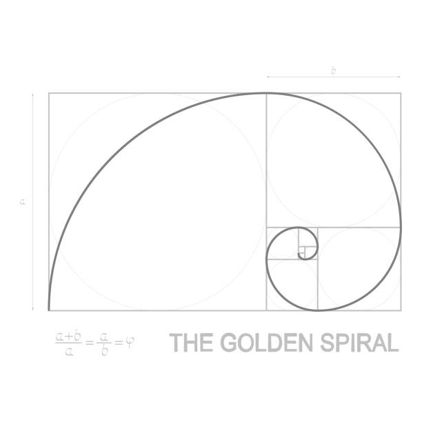 vector illustration on golden ratio concept - сетка фибоначчи stock illustrations