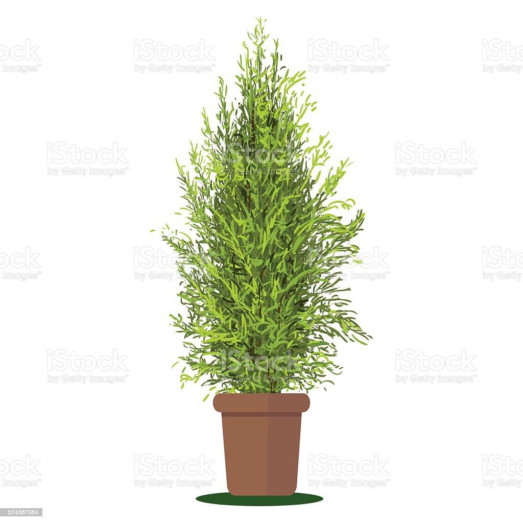 Illustrazione vettoriale delle piante in vaso. Thuja. - illustrazione arte vettoriale