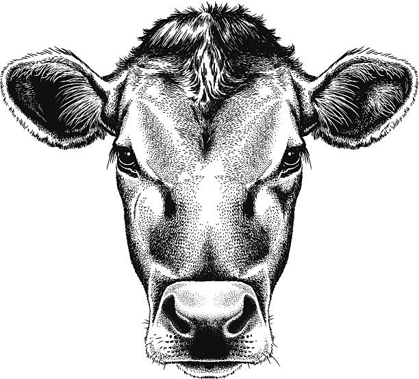 vector illustration portrait of a cow's face - cow stock illustrations, clip art, cartoons, & icons