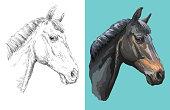 Hand drawn head of curious horse. Vector black and white and colorful isolated illustration of horse. For decoration, coloring book, design, prints, posters, postcards, stickers, tattoo, t-shirt