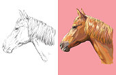 Hand drawn head of ginger horse. Vector black and white and colorful isolated illustration of horse. For decoration, coloring book, design, prints, posters, postcards, stickers, tattoo, t-shirt