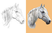 Realistic head of gray horse. Vector black and white and colorful isolated illustration of horse. For decoration, coloring book, design, prints, posters, postcards, stickers, tattoo, t-shirt