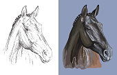 Head of thoroughbred horse. Vector black and white and colorful isolated illustration of horse. For decoration, coloring book, design, prints, posters, postcards, stickers, tattoo, t-shirt