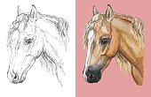 Hand drawn head of welsh pony. Vector black and white and colorful isolated illustration of horse. For decoration, coloring book, design, prints, posters, postcards, stickers, tattoo, t-shirt