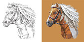 Realistic head of sportive pinto pony. Vector black and white and colorful isolated illustration of horse. For decoration, coloring book, design, prints, posters, postcards, stickers, tattoo, t-shirt