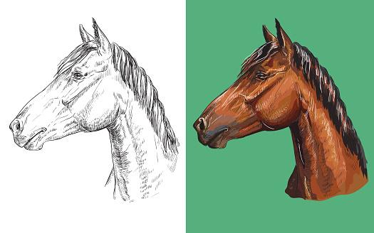 Vector illustration portrait of clever chestnut horse