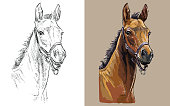 Realistic head of colt in the halter. Vector black and white and colorful isolated illustration of horse. For decoration, coloring book, design, prints, posters, postcards, stickers, tattoo, t-shirt