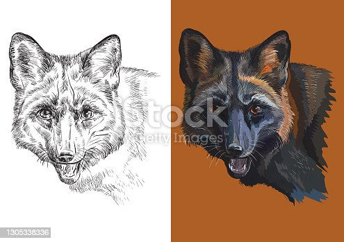 Vector illustration portrait of cute black fox
