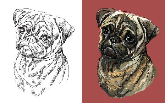 Vector illustration portrait of cute funny dog Pug