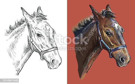 Vector illustration portrait of horse on red backgound