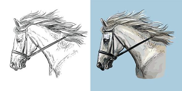 Vector illustration portrait of white sportive horse