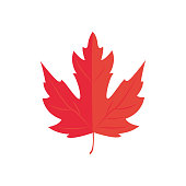 Vector Illustration. Red Maple leaf. Autumn icon leaf