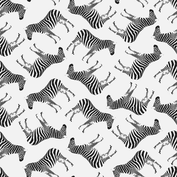 ilustrações de stock, clip art, desenhos animados e ícones de vector illustration. semaless pattern with zebras. black on white. - padrões zebra