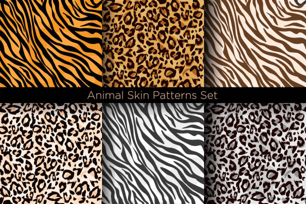 Vector illustration set of animal seamless prints. Tiger and leopard patterns collection in different colors in flat style. Vector illustration set of animal seamless prints. Tiger and leopard patterns collection in different colors in flat style animal markings stock illustrations