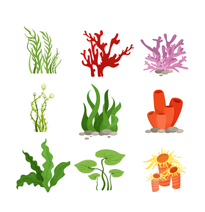 Vector illustration set of colourful water plants and coral isolated on white background in cartoon flat style.