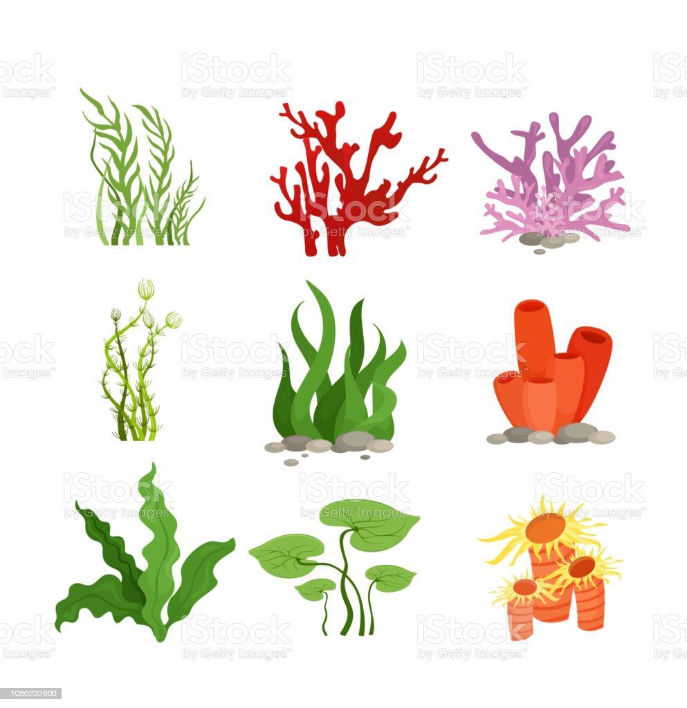 Ilustración de vector conjunto de plantas de agua colorida y coral aislado sobre fondo blanco en estilo plano de la historieta. - ilustración de arte vectorial