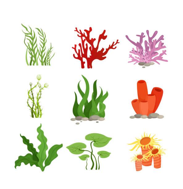 vektor-illustration set bunte wasserpflanzen und korallen isoliert auf weißem hintergrund im flachen cartoon-stil. - algen stock-grafiken, -clipart, -cartoons und -symbole