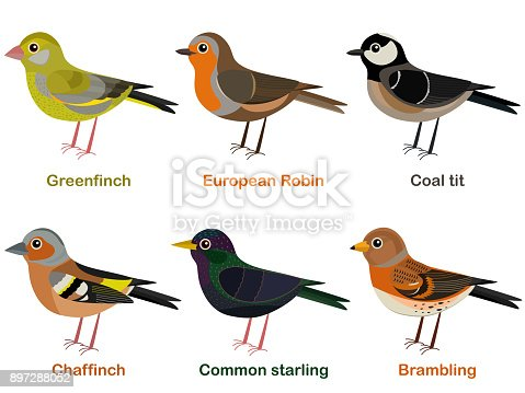 Vector illustration set of cute European bird cartoons - greenfinch, Robin, Coal tit, Chaffinch, Common starling, Brambling
