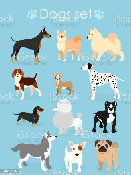 Vector illustration set of funny purebred dogs on a light blue vector id946192740?b=1&k=6&m=946192740&s=612x612&h=symimsyxt8ihvuqdbss3ecbbrr1nkdec9aukz3gzm94=