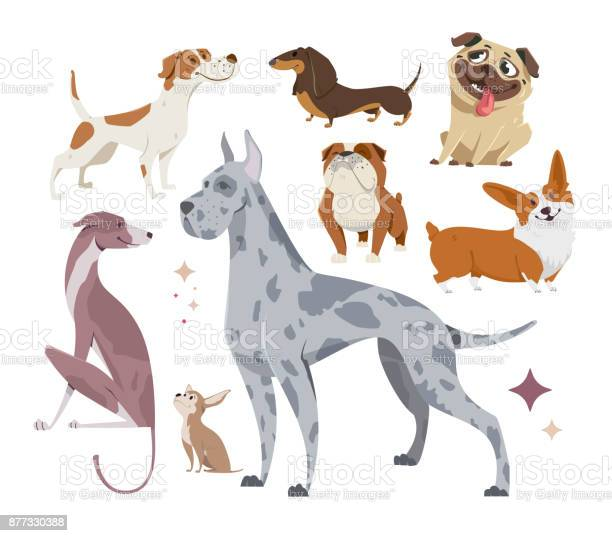 Vector illustration set of funny purebred dogs on a white background vector id877330388?b=1&k=6&m=877330388&s=612x612&h=haiy8mamh4lkl9sxhjuazvfycequowgl l5vyv3dghq=
