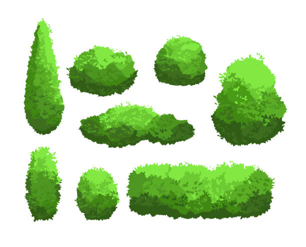 vector illustration set of garden green bushes and decorative trees. shrub and bush collection in cartoon style isolated on white background. - куст stock illustrations