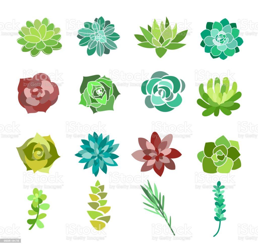 緑の多肉植物とサボテンの花のベクトル イラスト セット砂漠の植物は白い