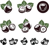 Vector illustration set of hazelnuts