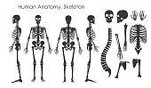 白い背景で隔離のシルエット スタイルで人間の骨骨格のベクトル イラスト セット。人体解剖学の概念、異なった位置のスケルトン。