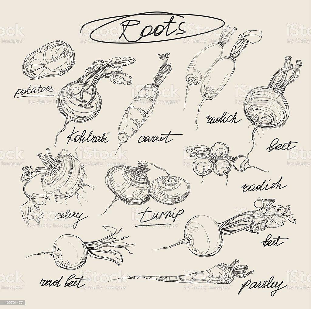 vector illustration set of roots vegetables vector art illustration