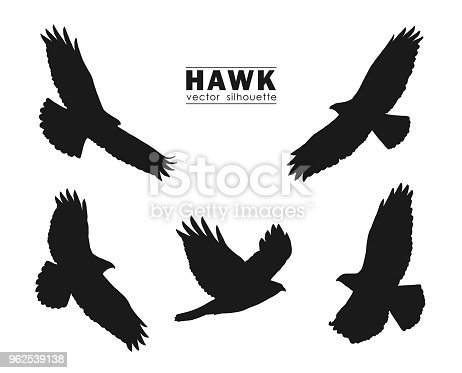Vector illustration: Set of Silhouettes of flying Hawk isolated on white background. Black eagles