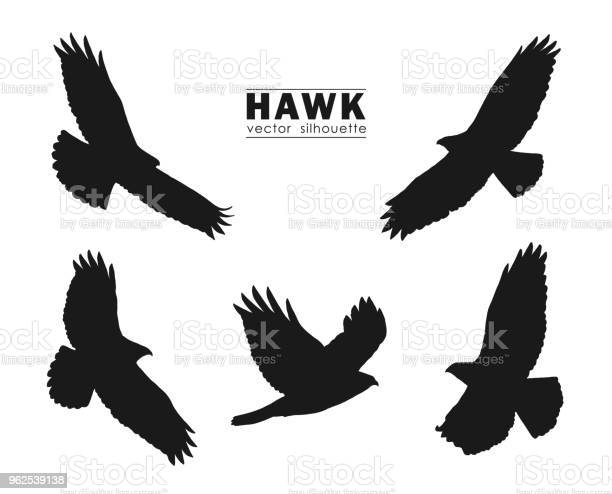 Vector illustration set of silhouettes of flying hawk isolated on vector id962539138?b=1&k=6&m=962539138&s=612x612&h=lnjy0yoir8axqswify1to6sd3r0xtlatrno7jwtsko0=