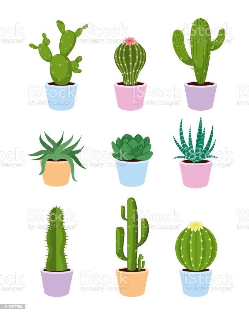 Vector Illustration Set Of Succulents And Cactus With Flowers On
