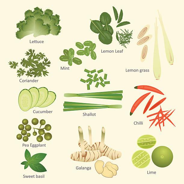 vector illustration set of thai food ingredients,isolated - thai food stock illustrations, clip art, cartoons, & icons