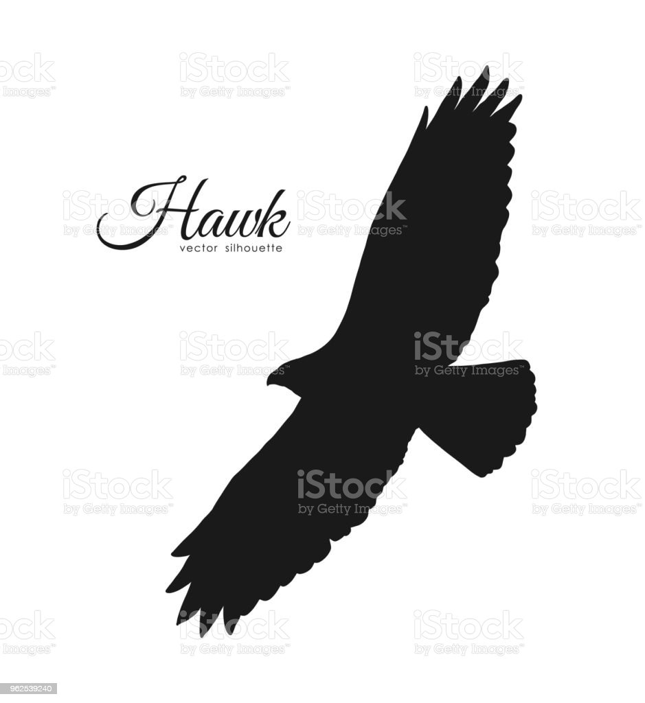 Vector Illustration Silhouette Of Flying Hawk Isolated On ...
