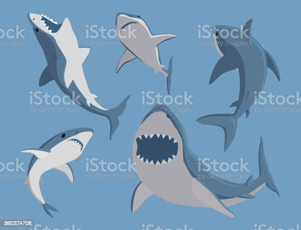 Vector illustration toothy swimming angry shark animal sea fish vector id860324708?b=1&k=6&m=860324708&s=612x612&h=zixyiriwai66w7qmksaix2gfclaebdbcbpkluskv sq=