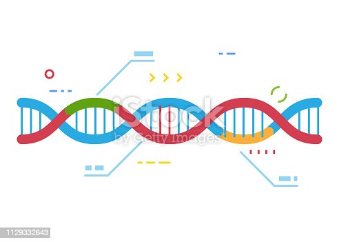 DNA molecule with regions with different colors. Crisp Cas 9 gene repairing technology. Genetic repair and infographic. Examination of human dna. Line style vector.
