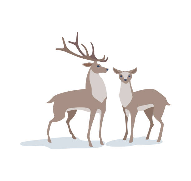 Vector illustration. Two red deer. Male and female. Beautiful illustration in the style of flat. For Christmas card, banner, poster. black white snow scene silhouette stock illustrations