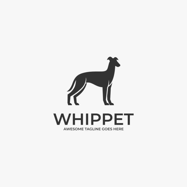 Vector Illustration Whippet pose Silhouette. Vector Illustration Whippet pose Silhouette. domestic animals stock illustrations