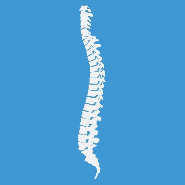 vector illustration weißen wirbelsäule diagnostische symbol - chiropraktiker stock-grafiken, -clipart, -cartoons und -symbole